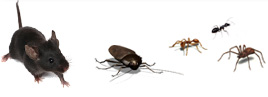 Don't let pests take over your home